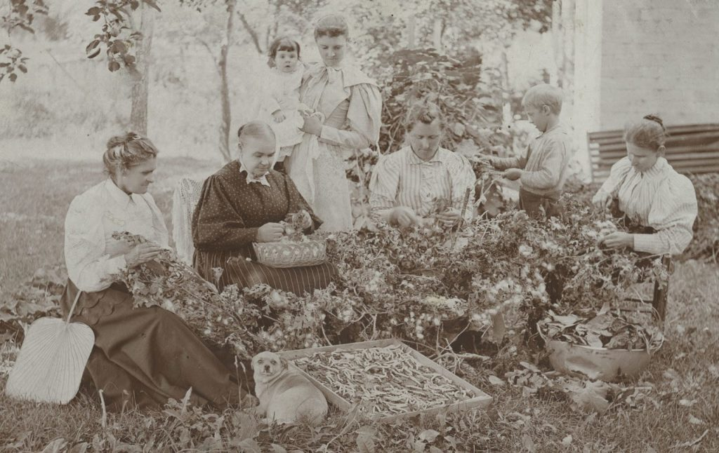 A black-and-white image of a group of women gathered around a pile of foliage.